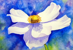 White flower, anemone, homage to Ann Mortimer, by... - DSC00283 (Dona Mincia) Tags: flower art watercolor painting paper arte flor inspired study tribute homage pintura aquarela inspirado whiteanemone rereading relecture annmortimer anmonabranca homenagemreleitura