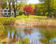 Quiet Spring Landscape (Stanley Zimny (Thank You for 18 Million views)) Tags: park red reflection building tree bird spring seasons nj ringwood