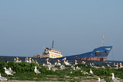 Danube's Beauty (MiruTheOneAndOnly) Tags: island shipwreck pelicans seagulls romania