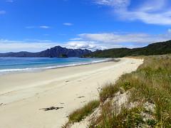 Sealers Bay (dracophylla) Tags: newzealand codfishisland whenauhoa