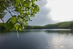 Leaves or lake? (Gentle Calm) Tags: park camping lake tree leaves taylor gatineau