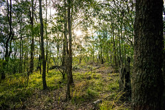 DSC_0060-2 (liammaurer1) Tags: camera blue trees light sunset sky flower tree green nature creek forest landscape log flora rainforest bright outdoor australia stump tall