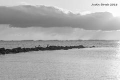 Sandy Point Sunrise 3 (strjustin) Tags: blackandwhite beach birds sunrise canon blackwhite 1855mm annapolis sandypoint 60d canon60d