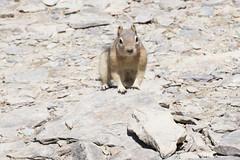 DSC_0625 (J F Wolford) Tags: park canada wildlife national alberta banff morainelake