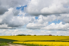 On the Countryside (Infomastern) Tags: sky cloud landscape countryside raps rapeseed landskap rapefield landsbygd