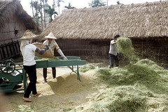 32-160 (ndpa / s. lundeen, archivist) Tags: houses homes winter people woman house color building fall film home rural 35mm buildings workers women village basket rice nick working taiwan machine barefoot worker thatchedroof 1970s 1972 hualien 32 taiwanese eastcoast unidentified thresher threshing dewolf rurallife thatchroof republicofchina easterncoast easterntaiwan nickdewolf photographbynickdewolf hualiencounty ricethresher threshingrice reel32