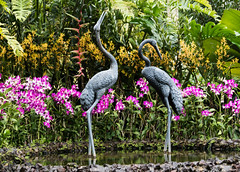 Visit to the Orchid Garden (Merrillie) Tags: cranes holidays orchid nikon flowers nature flower d5500 botanicalgardens flora travel gardens pond singapore statue natural outdoor tourist orchids