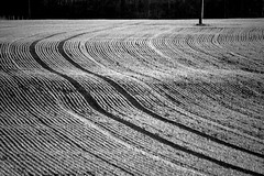 do farmers get dizzy? (Ray Byrne) Tags: blackandwhite bw field monotone alnwick northumberland raybyrne agriculturalmusic byrneoutcouk webnorthcouk