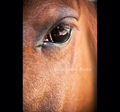 brown horse eye (Lella Leone Photo) Tags: horse brown macro reflection eyes cavallo occhio lellaleonephoto