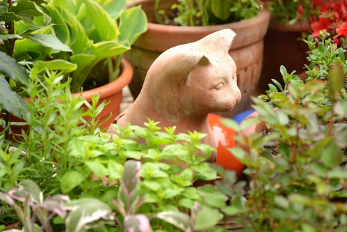 Cat Amongst the Herbs.