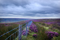 Above Rosedale Abbey (markahoy) Tags: abbey fence purple heather moors northyorkmoors rosedale moorland rosedaleabbey