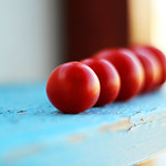 tomatini in a row thumbnail