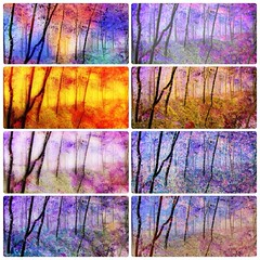 Spirit of the trees - Compilation (Andy Blackwell Photography) Tags: trees art nature woodland spirit relaxing calming fx spiritual healing psychic westlondon enchantedforest specialeffects healer londonist bedfontlakes colourtherapy spiritofthetrees