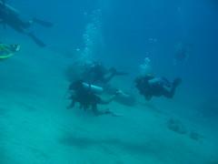 IMG_0462 (acmt2001) Tags: sea fish coral underwater  redsea scuba diving reef eilat aquasport
