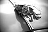 Jaguar Car Ornament in Black & White (APR Photography) Tags: cars car closeup blackwhite outdoor jaguar classiccars carhood carornament carbonnet
