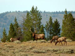 Grand Teton National Park, Wyoming, 2013 (matt-artz) Tags: wyoming tetons grandtetonnationalpark