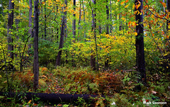 Fall Walk - Explore (mswan777) Tags: travel trees lake color fall nature leaves pine landscape woods nikon michigan dunes lakemichigan greatlakes polarizer circular d5100