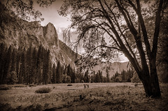Yosemite Valley (Joseph Plotz Photography) Tags: california park ca blackandwhite bw mountains tree nature beautiful field landscape outdoors nationalpark scenery natural hiking scenic valley yosemite