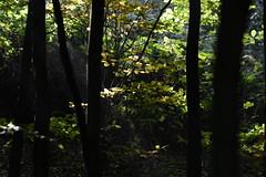 Herfstbos (oxipang) Tags: trees landscape bomen herfst zoetermeer lokey balijbos herfstbos