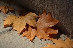 Y por fin llego -- EXPLORER (Cazador de imgenes) Tags: madrid street autumn espaa spain nikon otoo espagne spanien spagna spanje spania  spange 2013 d7000
