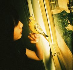 (cockatiella la) Tags: bird cockatiel 135    e2c lomographyxpro200 dianamini