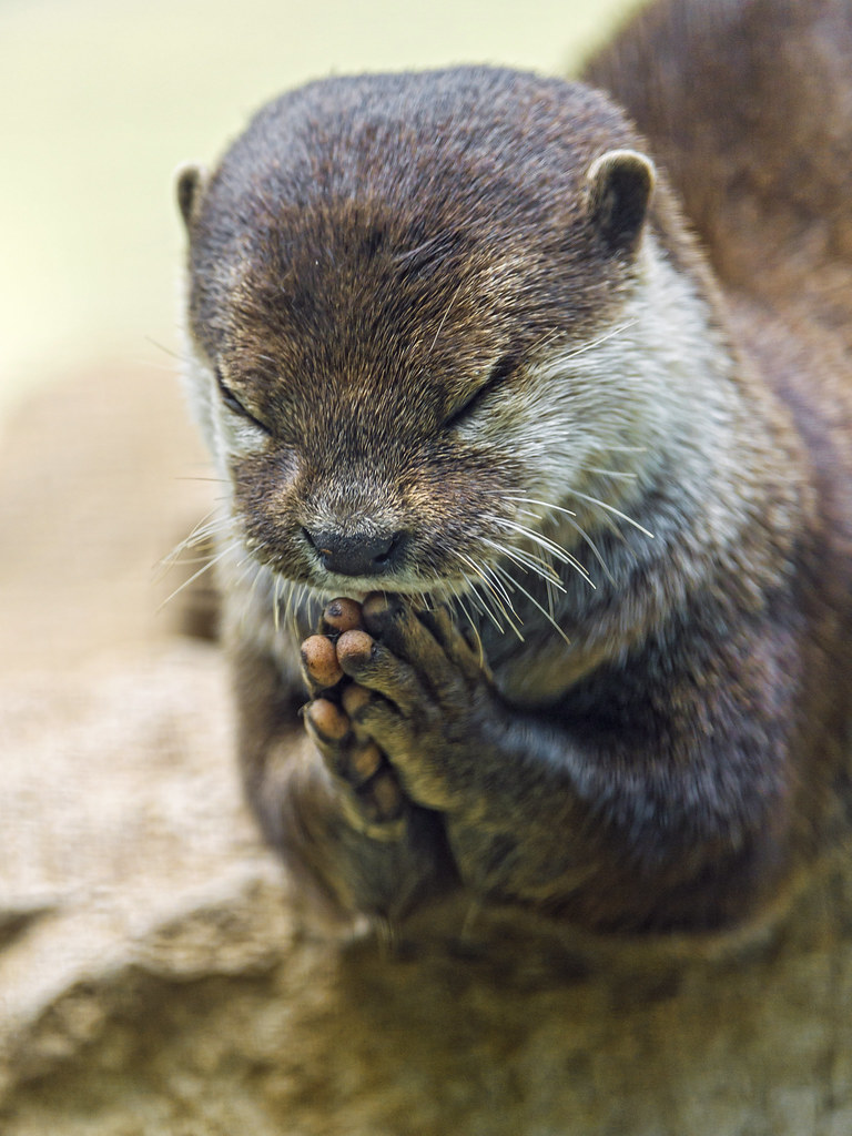 The Worlds Best Photos Of Hands And Otter Flickr Hive Mind
