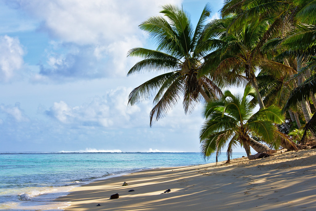 Coconut palms on the beach by Tomas Sobek, on Flickr