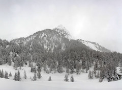 Snow in Engiadin (Wrinzo) Tags: winter snow alps alpes ali neve alpen inverno engadina maloja larici salecina engiadin rundolopemaloja