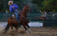 Rodeo 152 (iSPY Photography) Tags: yards horse spurs cowboy clown australia pickup bull nsw whip rodeo cowgirl steer saddle bronc bridle roping cooma akubra rodeorider coomarodeo2014