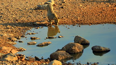 Water in the park (Liv ) Tags: africa park travel photo nikon tag1 national namibia etosha laivphoto