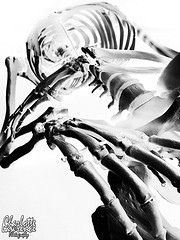 Retro (Charlotte Lawrence Arts) Tags: white signs black anime dark skulls skeleton skull hands ribs bones ribcage bone spine rib skeletons spines ram flamable