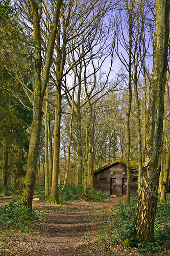 Shoreham Woods - The Cabin