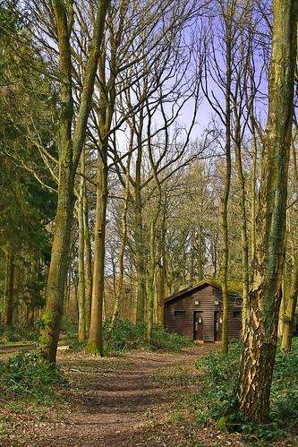 Shoreham Woods - The Cabin