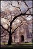 hanami 3 (fchemotti) Tags: washington seattle univeristyofwashington quad hanami sakura cherryblossom spring asahipentaxkx