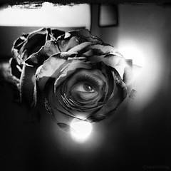 Beautiful Manners (rsmithing) Tags: iris blackandwhite flower eye nature beautiful rose noiretblanc surrealism surreal eyeball photomontage mascara surrealist pupil manners iphone hitamputih negrosobreblanco photoforge2 beautifulmanners