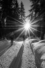 Into the woods II (Tore Thiis Fjeld) Tags: trees winter sun snow oslo norway forest skiing shadows crosscountry sk nordmarka skiers sunstar sonya6000 crosscountrypath