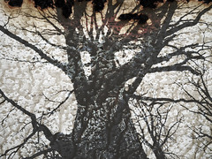 Hell is on Earth (Rossdxvx) Tags: trees abstract tree rot art texture silhouette dark landscape rust experimental shadows darkness grim outdoor decay michigan surrealism hell lofi surreal hellish overlay gritty textures minimalism dilapidation decaying dilapidated textured