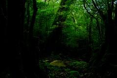 Yakushima #10 (k_t) Tags: green forest cedar yakushima mossy yaku