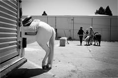 Horsing around in Novato, California. (Suitable 4 Framin') Tags: california horses horse cali novato cowgirl