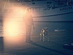 2016-05-05_20-11-29 (torstenbehrens) Tags: hafen burgstaaken fehmarn schleswigholstein panasonic dmcg1 mai on1 on1pic hund tier dog wauwau