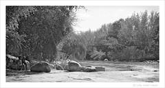At the Parys suspension bridge (dawid.loubser) Tags: panorama monochrome river bridges freestate parys rawtherapee micronikkor55mmf28ais nikondf