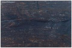 DSC_0150 (tonydg57) Tags: del torre campania napoli vesuvio vulcano pompei ercolano greco
