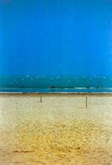 Scan20122 (the best maio) Tags: sea dog cane mare surreal sands gabbiani sabbia surreale