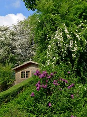 Our Alpine Gardens. (Keefy243) Tags: blue trees sky cloud face shed lilac alpine hedges mayflowers malinbridge sheffieldsouthyorkshireuk