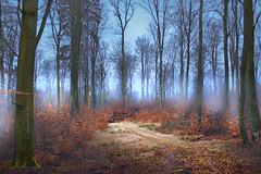 In the woods of North Germany (Sebastian Ugovsky) Tags: wood trees mist nature fog outdoor documentary mystic locationscouting sebastianugowski sebastianugovsky