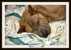 Life is .........soft (patrick.verstappen) Tags: sleeping summer pet animal photo google nikon flickr sigma sleepy facebook picassa daiko gingelom pinterest