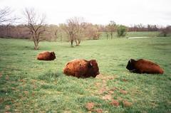 (Kenneth Swoger) Tags: light film analog 35mm point photo buffalo shoot fuji natural superia snapshot olympus missouri vida 400 28 xa expired bison kenneth por aesthetic xtra rangfinder swoger
