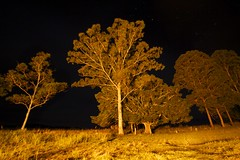 Bonfire backlighting (daniel_james) Tags: longexposure trees night rural stars farm australia nsw bentley northcoast 2016 canon1022mm northernrivers