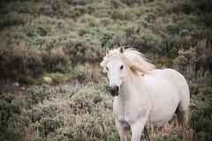 tonyworkshop336 (Muddy Love Photography) Tags: horses horse winner wyoming herd