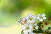 Spring Watch in London Park (pallab seth) Tags: park england flower macro london nature garden spring dof blossom bokeh outdoor petal bloom barking signofspring springgarden 2016 barkingpark nikond7000 tamronaf90mmf28dispam11macrolens